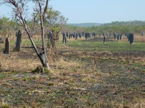 Not a graveyard - magnetic termite mounds.