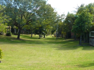 An avenue of trees lining a valley of green, one of several.