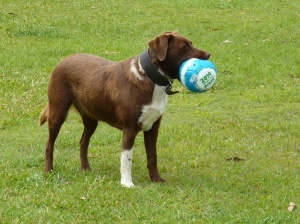 Abbey with her ball.