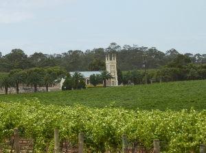 Grape vines in the Barossa