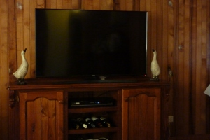 Farmyard ducks looking up at our TV