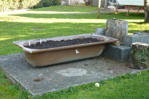 Bath makes good raised garden bed. Potted herbs are yet to be added to make full use of disused slab.