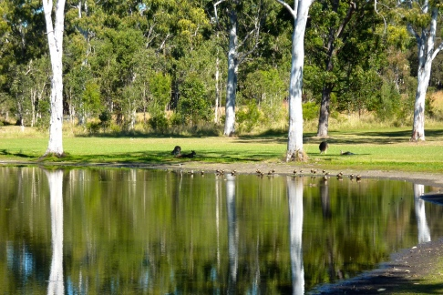 Silver trunked trees surrounding our billabong.