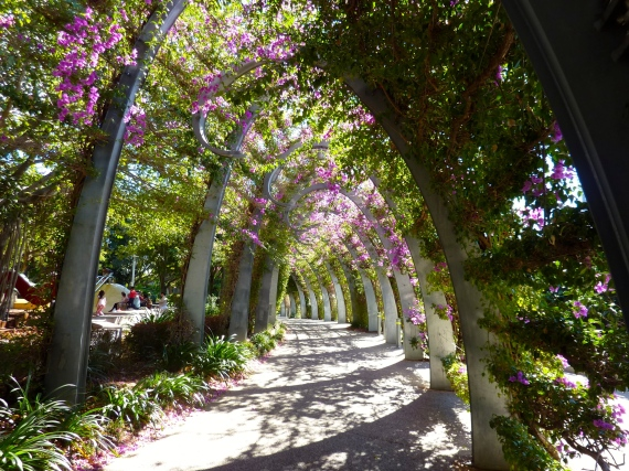 1 km long bougainvillia covered walk winding through Brisbane's south bank.