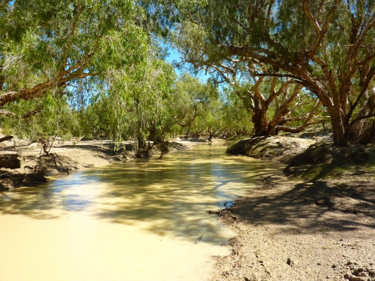 The murky, but tranquil Flinders river running through the property - croc habitat, so didn't get too close.