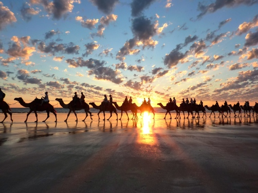 The iconic Cable Beach Camel Trains.
