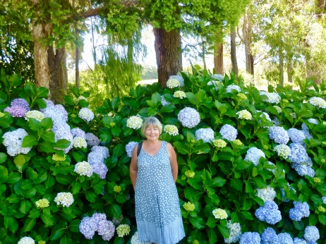 Beautiful Hydrangea at Aravina Winery Estate - beautiful meal too.