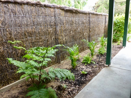 A newly planted green tropical garden against the backdrop of the brushwood fence (also new).